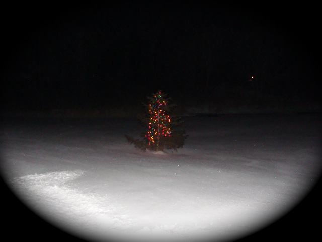 Charlie Brown Tree 2008.jpg